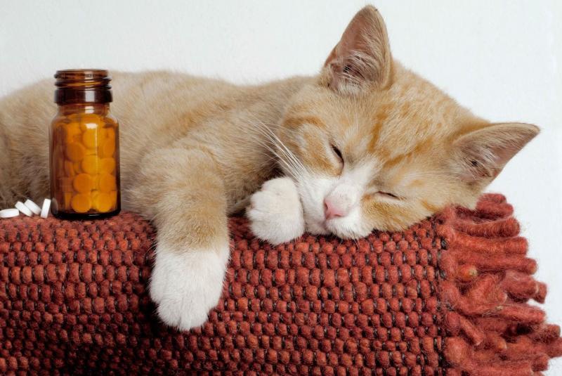 Проблемы с почками у кота симптомы и лечение что делать фитоэлита