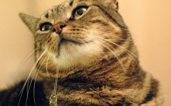 Котик с обильным слюнотечением