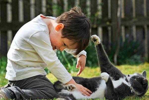 Мальчик играет с котом на траве