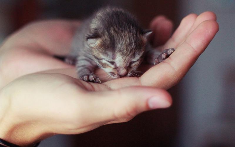 Котёнок без мамы: как помочь новорождённому
