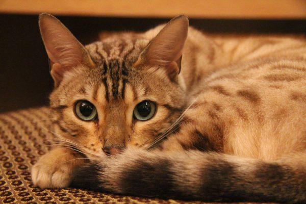 Неудовлетворительное состояние кошки