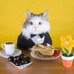 Кот за столом с блинами и кофе