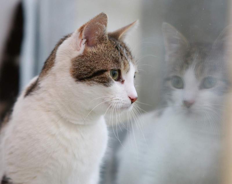 Кожные заболевания у кошек: какие виды дерматитов бывают и как от них избавиться