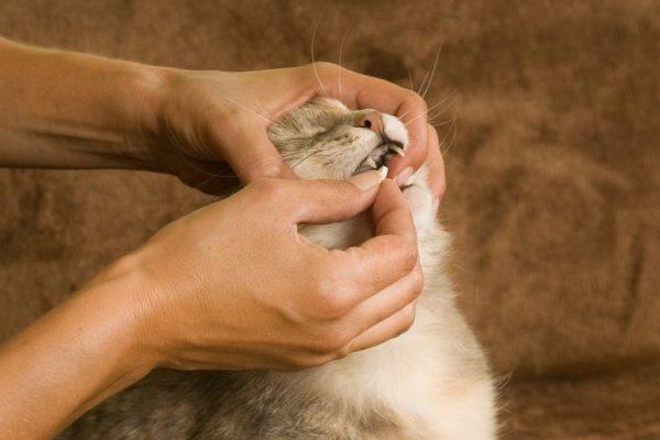 Таблетка коту