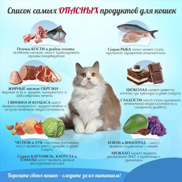 вредные для кошки продукты