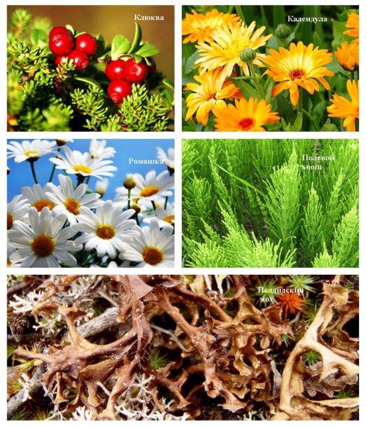 Лекарственные травы и исландский мох