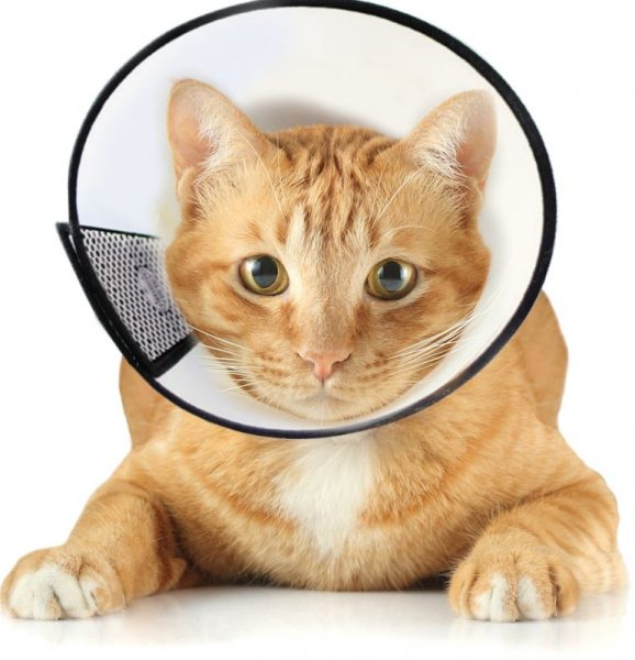 Воротник для кошки