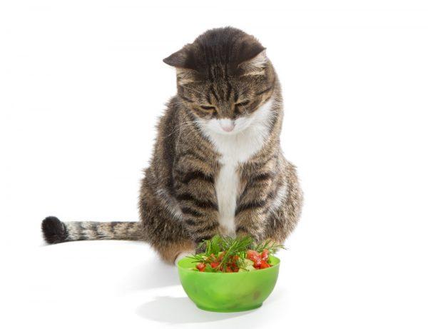Плохой аппетит у кошки
