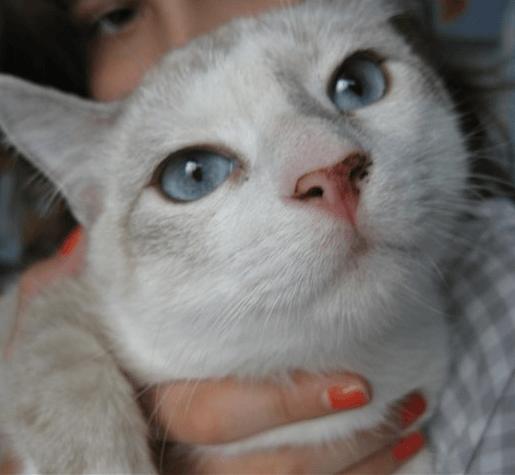У кошки грязный нос