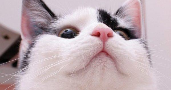 Розовый нос кошки