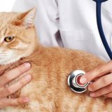 Рыжий кот заболел