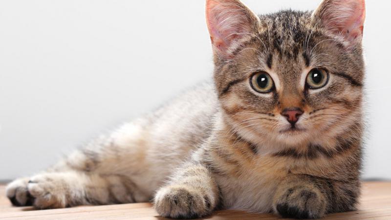 Мазь ЯМ БК для кошек: описание, область применения, а также достоинства и недостатки