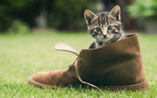 Котёнок сидит в ботинке