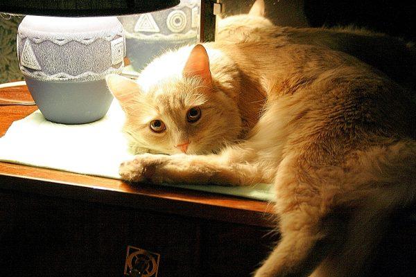 Кот под лампой