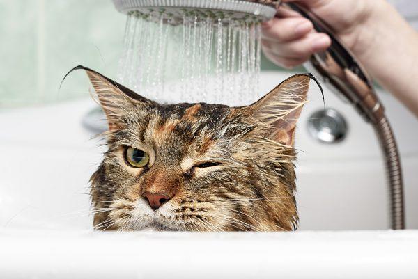 Кота поливают из душа