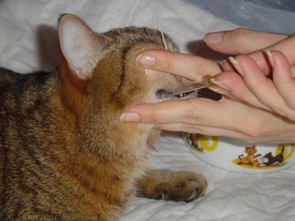 Как поить больного кота