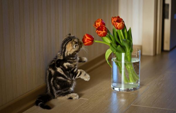 Котёнок сидит на полу и нюхает тюльпаны в стеклянном стакане