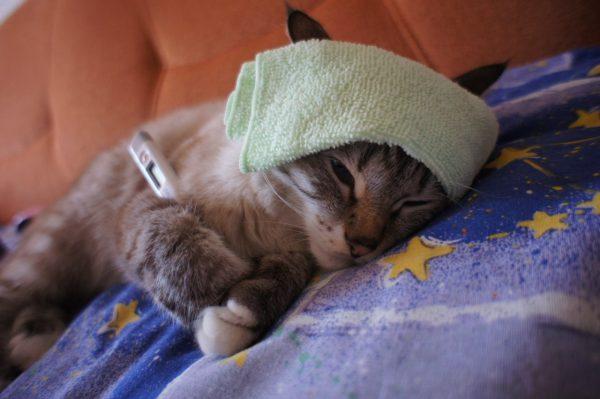 Кот лежит на синей простыне с компрессом на лбу и градусником подмышкой