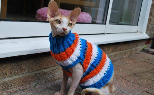 Сфинкс в разноцветном свитере сидит на подоконнике