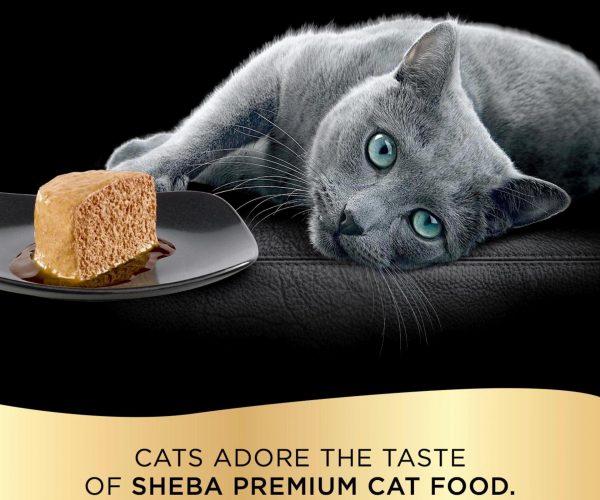 Русская голубая кошка из рекламы «Шеба»