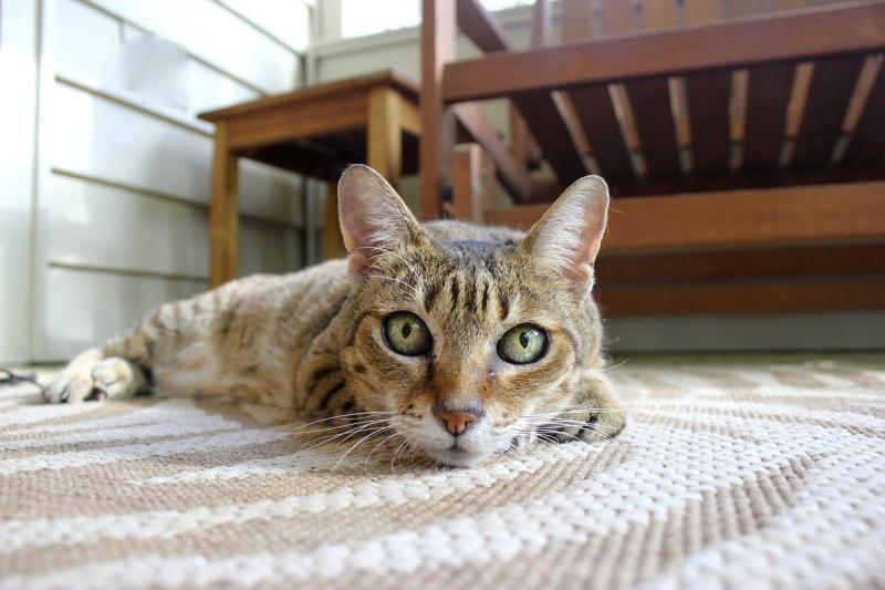 Препарат Уролекс при мочекаменной болезни у кошек