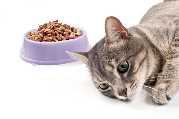 Ухудшение аппетита у кошки