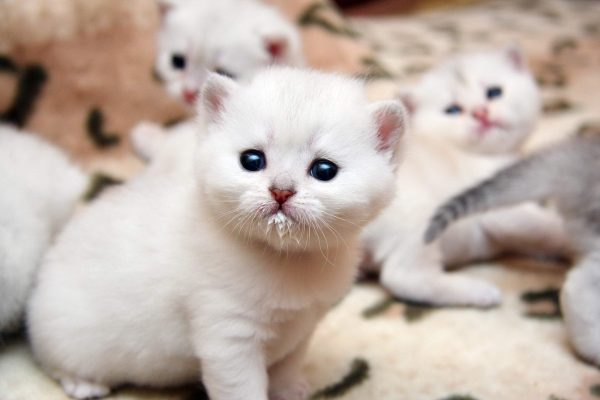 Помощь котёнку