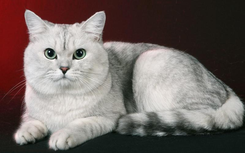 Чем опасен поликистоз почек у кошек и какие методы лечения применяются