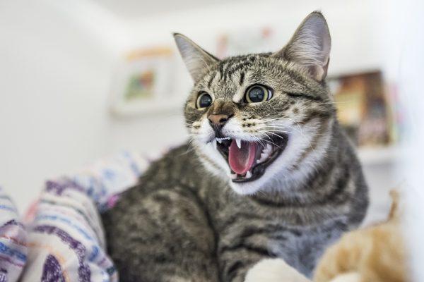 Кот боится уколов