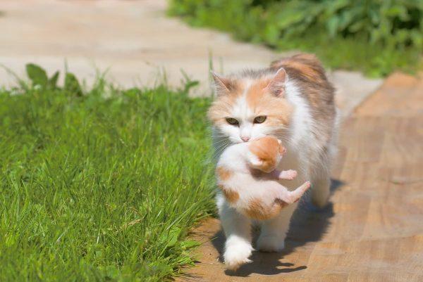Холка котов