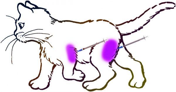 Внутримышечные уколы котам