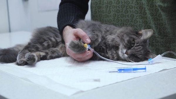 Катетер у кота