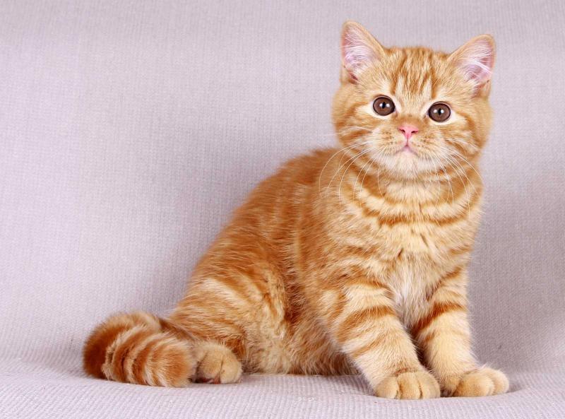 Препарат Эвинтон: эффективное средство для поддержания иммунитета кошки