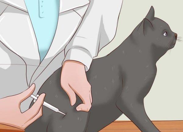 Введение инъекции кошке