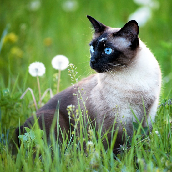 Кошка среди травы