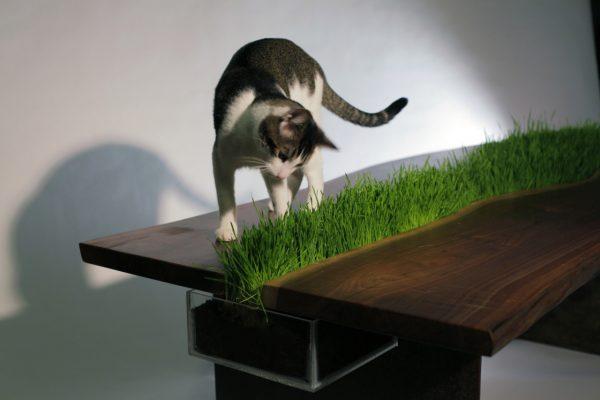 Кот смотрит на траву