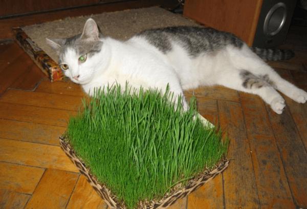 Кот лежит возле травы