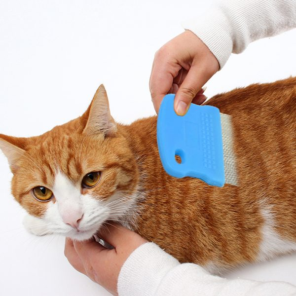 Вычёсывание блох у кошки