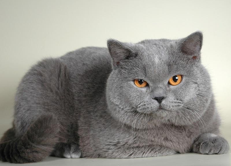 Чёрные точки у кошки: почему возникают и как их можно устранить