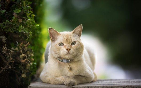 Ошейник с колокольчиком для кошек