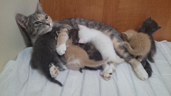 Кошки в зоне риска