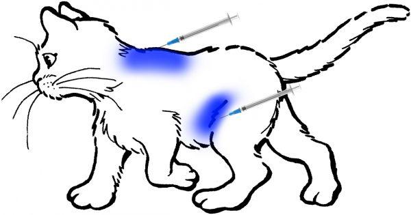 Места для подкожных уколов у кошки