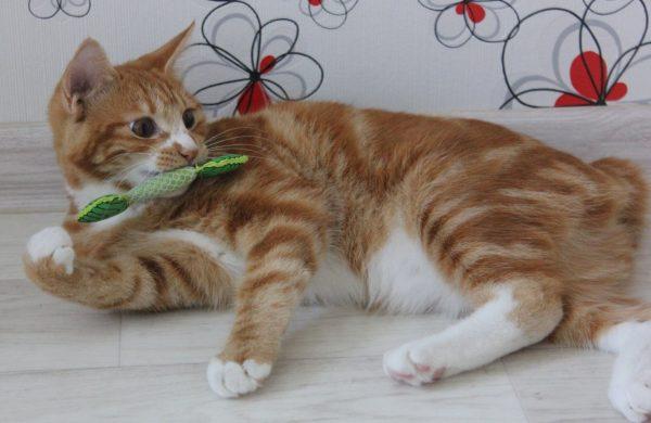 Игрушка-зубочистка для кошек