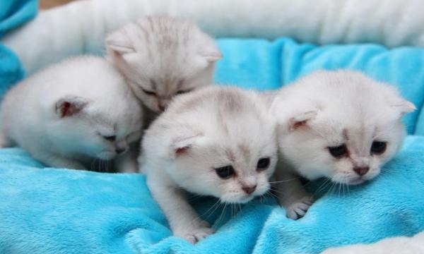 Маленькие котята