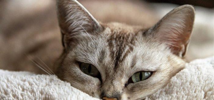 Лежащий кот