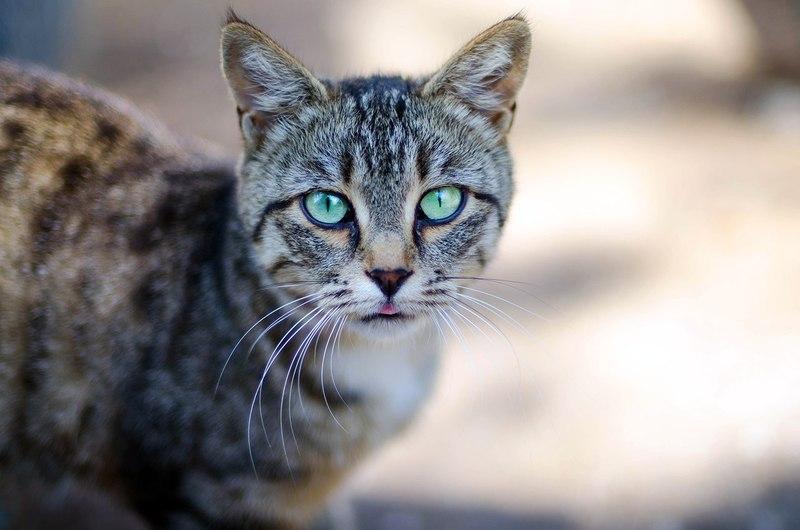 Почему опухает нижняя губа у кошки и какие меры предпринять