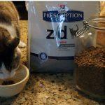 Пятнистый кот ест корм рядом с упаковкой Хиллс