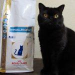 Черный кот сидит рядом с упаковкой корма Роял Канин