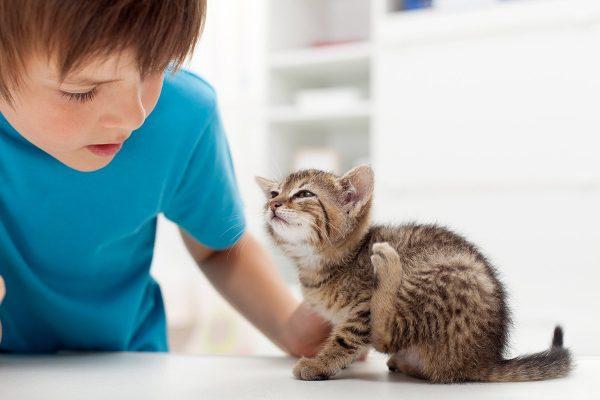 Мальчик в синей футболке смотрит на сидящего на столе полосатого котёнка, чешущего у себя за ухом задней лапкой