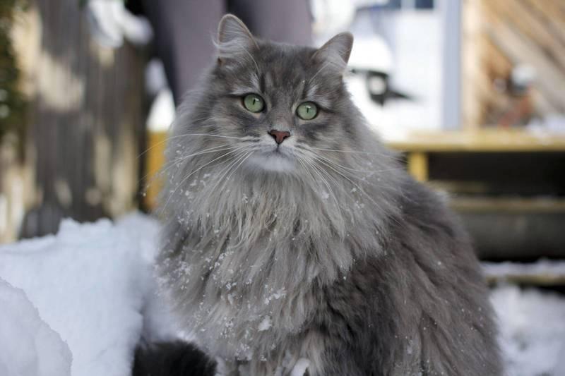 Препарат Марфлоксин: помощь в борьбе с инфекционными заболеваниями у кошек